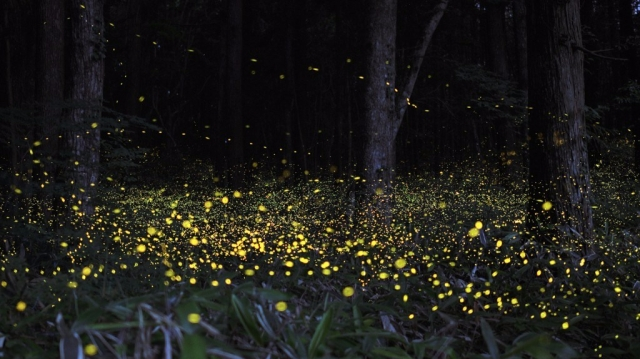 japan-firefly-long-exposure-4-1024x576